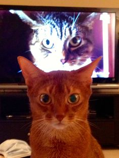 """I was watching """"My Cat From Hell"""" on Animal Planet and then this happened..."""