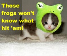 Funny Animals Saying Funny Things | Kitten's have military tactics too. But you would not know about ...