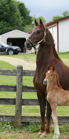 Like mother like daughter!                                           That mare has a big neck