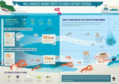 WWF - INFOGRAPHIC: How well managed marine protected areas support fisheries in temperate areas