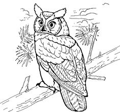 Pics For Great Horned Owl Drawing Art Animals And Insects Coloring Page