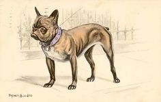 french-bulldog-postcard-1911