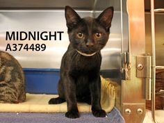 Adopted! Midnight has found his forever home. 7/25/15.