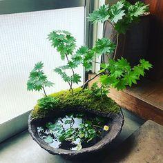Best Indoor Garden Ideas for 2020 - Modern Garden Terrarium, Bonsai Garden, Garden Pots, Water Terrarium, Mini Terrarium, Indoor Water Garden, Indoor Plants, Indoor Gardening, Air Plants