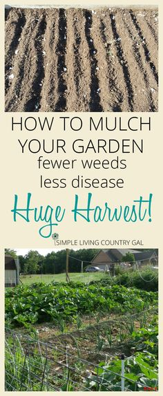 How to mulch your garden effectively so you eliminate weeds, reduce diseases and increase your harvest. It's easier than you think! and cheap too. via @SLcountrygal