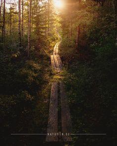 """Hiking on the """"Bergslagsleden"""" trail"""