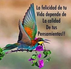 the magic of colors Quotes En Espanol, Positive Phrases, Spiritual Messages, Inspirational Phrases, Spanish Quotes, Latin Quotes, Music Quotes, Nature Animals, Famous Quotes