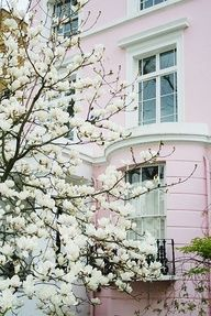 One day.. A magnolia tree in the front and an apple tree in the back  Pink house might be nice too