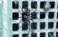 Därför har du mycket spindlar hemma och så håller du dem borta