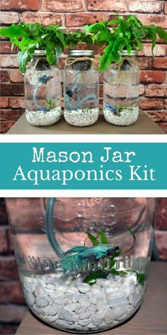 System - This would be a really nice idea, pretty cool aquaponics kit using mason jars! The Mason Jar Aquaponics handmade kit is perfect for your new and sustainable indoor herb garden / salad garden. Break-Through Organic Gardening Secret Grows You Up To Aquaponics System, Indoor Aquaponics, Hydroponic Gardening, Organic Gardening, Mason Jar Garden, Mason Jars, Mason Jar Herbs, Gardening For Beginners, Gardening Tips