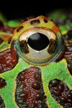 Frog Eye--Close up animal eyes. Great idea for an art lesson.
