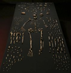 Homo Naledi via livescience: Researchers unearthed fossils from at least 15 individuals belonging to the newfound species, Homo naledi, in the Rising Star cave system in South Africa. #Science #Evolution #Homo_Naledi