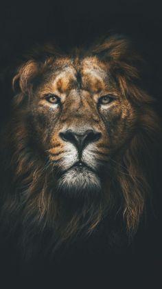 24 trendy ideas for lion art wallpaper iphone Tier Wallpaper, Animal Wallpaper, Orange Wallpaper, Wallpaper Keren, Wallpaper Art, Animals Images, Cute Animals, Jungle Animals, Wild Animals