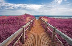 Pink Beach, Prince Edward Island