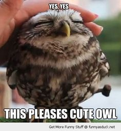 Cute Baby Flat Face Owl .....this pleases baby owl..