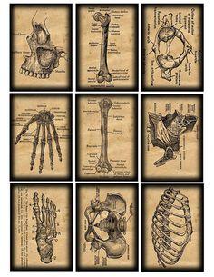 vintage anatomical illustrations