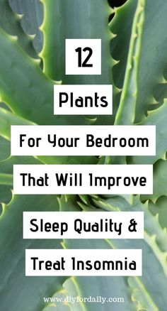 Having a problem with sleeping is common nowadays. There are so many people all over the world who cannot sleep because of work pressure, stress and it results in health decrease. Inside Plants, Cool Plants, Inside Garden, Ivy Plants, Can Not Sleep, Golden Pothos, Outdoor Plants, Plants Indoor, Spider Plants