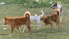 Top Viral Video Funny Street Dog Meeting At Countryside | How To Spend T...