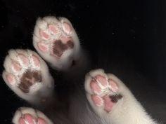 kitten scan