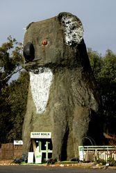 The Big Koala - Dadswells Bridge - Victoria Wildlife Tourism, Bridge, Teddy Bear, Victoria, Tours, Australia, Travel, Animals, Viajes