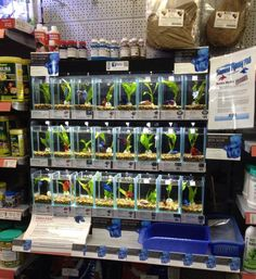 What a Betta Display in a pet store or aquarium should be! Just Great!!