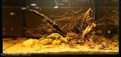 2014 AGA Aquascaping Contest - Entry #520 Tropical Fish Aquarium, Planted Aquarium, Aquascaping, Fish Aquarium Decorations, Biotope Aquarium, Container Water Gardens, Aquarium Design, Saltwater Tank, Tanked Aquariums