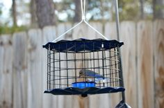 Caged feeders are used to keep larger birds like starlings out yet let the bluebirds, warblers, and wrens in. Thanks to the The Best Nest of GA ( Wrens, Bluebirds, Starling, Wild Birds, Bird Feeders, Nest, Larger, Good Things, Twitter