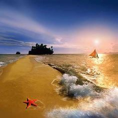 Starfish, Palawan by Per-Andre Hoffmann