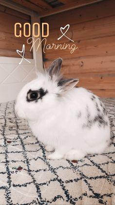 #bunny #instagram #instagramstoryideas #rabbit #cute #bunnyphotography Instagram Story Ideas, Insta Story, Rabbit, Bunny, Cute, Photography, Animals, Rabbits, Cute Bunny