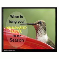 When do the hummingbirds return