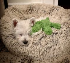 Westie Puppies, Cute Puppies, Doggies, Dogs And Puppies, Beautiful Dogs, Animals Beautiful, Animals And Pets, Cute Animals, Raining Cats And Dogs