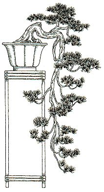 A brief description of the many Japanese Bonsai Styles including Formal Upright, Cascade, Driftwood and more. Bonsai Maple Tree, Japanese Bonsai Tree, Bonsai Tree Care, Juniper Bonsai, Bonsai Plants, Bonsai Garden, Cactus Plants, Bonsai Tree Tattoos, Pencil Trees