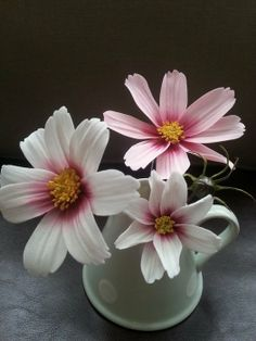 Sugar Cosmos Flower - by La lavande Cake Boutique @ CakesDecor.com - cake decorating website