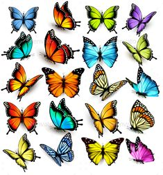 Find Collection Colorful Butterflies Flying Different Directions stock images in HD and millions of other royalty-free stock photos, illustrations and vectors in the Shutterstock collection. Butterfly Drawing, Butterfly Pictures, Butterfly Painting, Butterfly Wallpaper, Butterfly Watercolor, Butterfly Design, Butterfly Wings, Rose And Butterfly Tattoo, Colorful Butterfly Tattoo