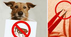 Elimine las pulgas y garrapatas con este champú natural casero - e-Consejos Love Pet, I Love Dogs, Dog Dresses, Animal House, Doberman, Dog Care, Dog Mom, Dog Training, Animals And Pets