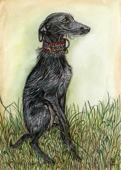 Those little wispy whiskers - Lurcher Art Print - EXTRA LARGE  signed print.  Elle Wilson