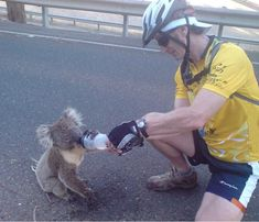 Black Saturday Bushfires Victoria Australia Koala bear being giving water by cyclist Feed My Lambs, Black Saturday, Human Kindness, Dating Advice For Men, Victoria Australia, Love People, Real People, Funny Memes, Pets