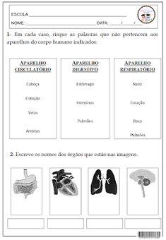 SOSPROFESSOR-ATIVIDADES: Corpo humano