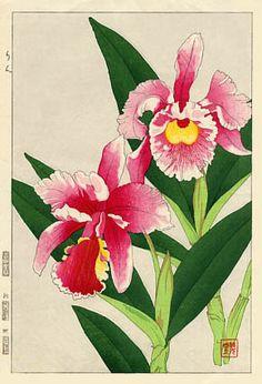 Orchids, Catleya  by Kawarazaki Shodo  (published by Unsodo)