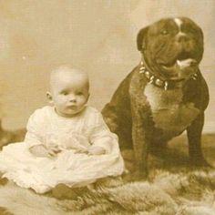 "Vintage Pit Bull, the ""Nanny"" Dog #pitbulllove #pitbulls #pitbullvintage #pitbull"
