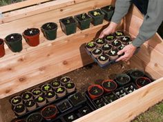 Cold Frame For Winter Gardening