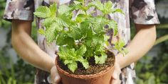 7 Disease-Fighting Plants You Need To Be Eating