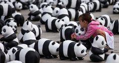 Polowania dla trofeów służą ochronie środowiska – czytamy na stronach internetowych WWF. Część aktywistów zdaje się tego nie dostrzegać.