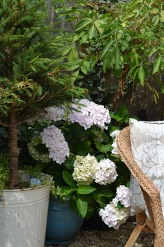 Why did I buy more plants? Hydrangea, City, Garden, Plants, Stuff To Buy, Beautiful, Lawn And Garden, Cities, Gardens