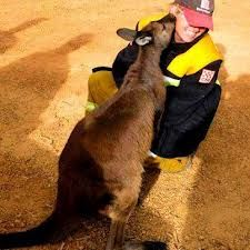 Looks like someone wants to thank the hard working Australian firefighters with the Country Fire Authority. Cool Countries, Countries Of The World, Firefighter Birthday, Adelaide South Australia, Fire Fighters, Firefighting, Australia Living, Great Barrier Reef, Volunteers