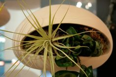 Futuristic Alien-Like Planters – Golly Pods by Tend | Home Decor