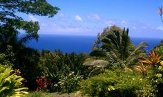 Garden of Eden Arboretum in Maui, Hawaii #Maui #Hawaii #Vacation