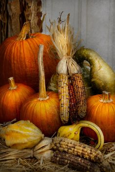 What goes better with fall than pumpkins, gourds and Indian corn? Harvest Time, Fall Harvest, Fall Pictures, Pumpkin Pictures, Autumn Scenes, Happy Fall Y'all, Fall Halloween, Halloween Gifts, Happy Halloween