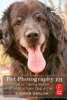 Pet Photography 101: Tips for taking better photos of your dog or cat by Andrew Darlow