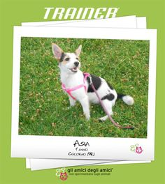 Our Friend Of The Week is: Asia, 1 year old, Colorno (PR) Italy.